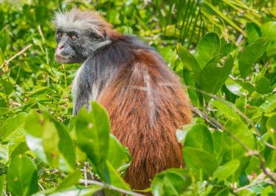 Zanzibar Magic - Jozani Forest